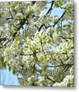 Blossoms Whtie Tree Blossoms 29 Nature Art Prints Spring Art Metal Print
