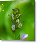 Blossom Dream Metal Print