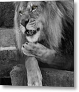 Blow You A Kiss  Black And White  T O C Metal Print