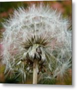 Blowball 2 Metal Print