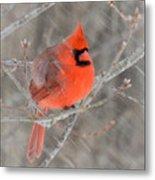 Blowing Snow Cardinal Metal Print