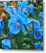 Blue After The Rain Metal Print