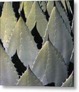Blue Agave Cactus Metal Print