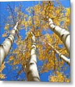 Blue And Gold Metal Print