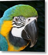 Blue And Gold Macaw Freehand Painting Square Format Metal Print