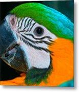 Blue And Gold Macaw Headshot Metal Print