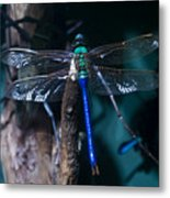 Blue And Green Dragonfly Metal Print
