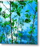 Nature's Gifts Of Blue And Green Metal Print