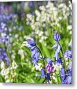 Blue And White Hyacinth Flowers Metal Print