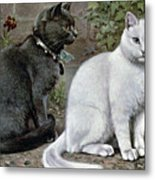 Blue And White Short Haired Cats Metal Print