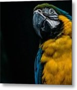 blue and yellow Macaw Metal Print