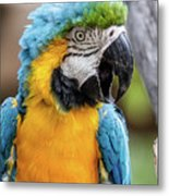 Blue And Yellow Macaw Vertical Metal Print