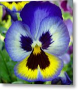 Blue And Yellow Pansy Metal Print