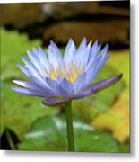 Blue And Yellow Water Lily Metal Print
