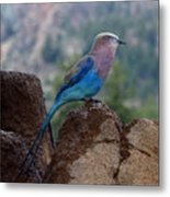 Blue Bird Metal Print