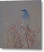 Blue Bird Colored Pencil Metal Print