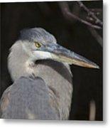 Blue Bird Metal Print
