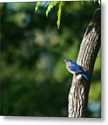 Blue Bird Perched Metal Print