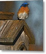 Blue Bird Songs Metal Print