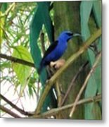 Blue Bird With A Curved Bill Metal Print