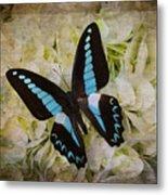 Blue Black Butterfly Dreams Metal Print