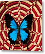 Blue Black Butterfly In Basket Metal Print