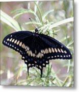 Blue Black Swallowtail Metal Print