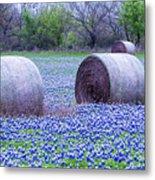 Blue Bonnets In Field Metal Print