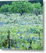 Blue Bonnets,poppies And Willow Tree 2 Metal Print