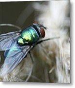 Blue Bottle Fly On Garden Twine Metal Print