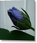 Blue Bud Metal Print