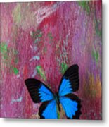 Blue Butterfly On Colorful Wooden Wall Metal Print