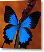 Blue Butterfly On Violin Metal Print