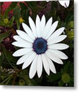 Blue Center Daisy Metal Print