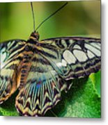 Blue Clipper - Looking Up Metal Print