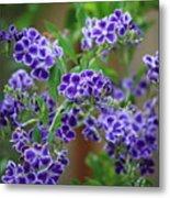 Blue Cottage Flowers Metal Print