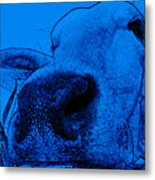 Blue Cow Metal Print