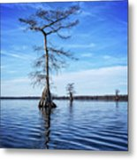 Blue Cypress Metal Print