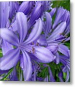 Blue Delight Metal Print