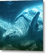 Blue Depths Sea Turtle Metal Print