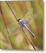 Blue Dragonfly Against Green Grass Metal Print
