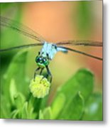 Blue Dragonfly And Bud Metal Print