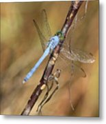 Blue Dragonfly Portrait Metal Print by Carol Groenen