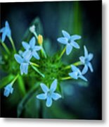Blue Dreams Metal Print