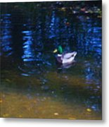Blue Duck Metal Print