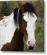 Blue Eyed Beauty Metal Print