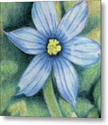 Blue Eyed Grass - 1 Metal Print
