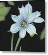 Blue Eyed Grass - 2 Metal Print