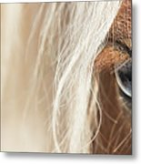 Blue Eyed Horse Metal Print