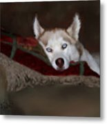 Blue Eyes Metal Print by Colleen Taylor